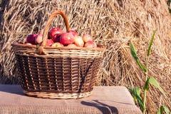 Cesta con las manzanas Fotografía de archivo libre de regalías