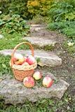 Cesta con las manzanas Imagen de archivo libre de regalías