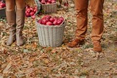 Cesta con las manzanas Foto de archivo libre de regalías