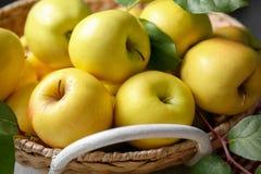 Cesta con las manzanas amarillas maduras Imagen de archivo libre de regalías
