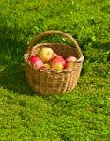 Cesta con las manzanas en hierba Fotografía de archivo libre de regalías