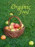 Cesta con las manzanas en hierba verde Fotografía de archivo libre de regalías