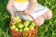 Cesta con las manzanas en la hierba Foto de archivo libre de regalías