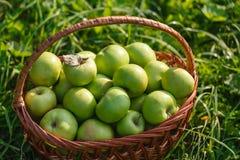 Cesta con las manzanas en la hierba Fotografía de archivo