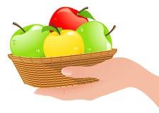 Cesta con las manzanas en mano humana Imagen de archivo