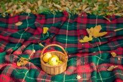 Cesta con las manzanas que mienten en la tela escocesa Foto de archivo libre de regalías