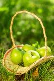 Cesta con las manzanas verdes Fotos de archivo