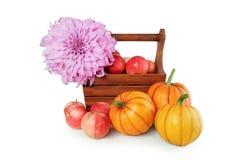 Cesta con las manzanas y las calabazas en un fondo blanco Imagen de archivo libre de regalías