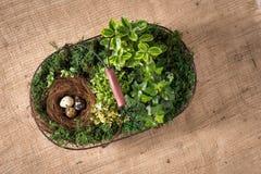 Cesta con las plantas y los huevos Fotografía de archivo libre de regalías
