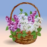 Cesta con las ramas de la lila blanca y rosada libre illustration