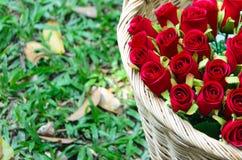 Cesta con las rosas rojas en un fondo de la hierba Foco en rosas Foto de archivo libre de regalías