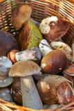 Cesta con las setas comestibles Foto de archivo libre de regalías