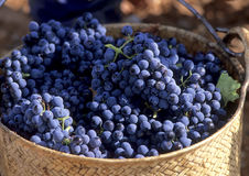 Cesta con las uvas Imagenes de archivo