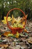 Cesta con las uvas Foto de archivo libre de regalías