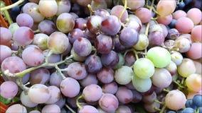 Cesta con las uvas en la hierba almacen de metraje de vídeo