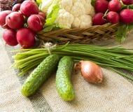 Cesta con las verduras frescas de la primavera Fotos de archivo libres de regalías