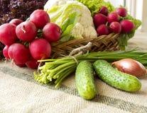 Cesta con las verduras frescas de la primavera Imagen de archivo