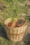 Cesta con las zanahorias Imágenes de archivo libres de regalías