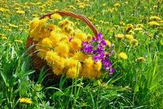 Cesta con los dientes de león y las violetas en la hierba Fotos de archivo