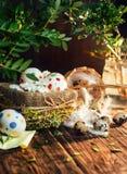 Cesta con los huevos de Pascua pintados en un círculo, rama de la primavera con las hojas verdes, Imagen de archivo libre de regalías
