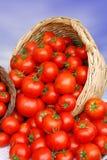 Cesta con los tomates foto de archivo libre de regalías