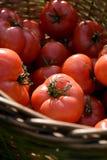 Cesta con los tomates Fotografía de archivo libre de regalías