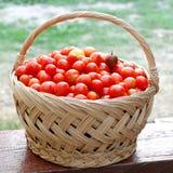 Cesta con los tomates de cereza Foto de archivo libre de regalías
