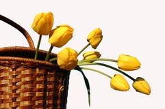 cesta con los tulipanes amarillos   Imagen de archivo libre de regalías