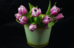 Cesta con los tulipanes rosados Imagen de archivo libre de regalías
