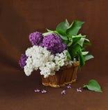 Cesta con una rama de la flor de la lila Fotos de archivo libres de regalías