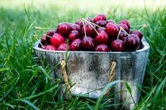 Cesta da cereja Cherry Tree Branch Cerejas maduras frescas ch doce Imagens de Stock