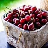 Cesta da cereja Cherry Tree Branch Cerejas maduras frescas ch doce Foto de Stock