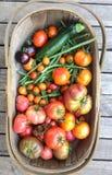 Cesta da colheita do trug do jardim com vegetais caseiros, tomates, imagens de stock