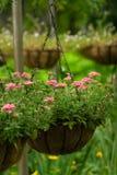 Cesta da flor Foto de Stock