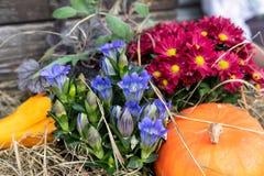Cesta da flor com abóbora imagens de stock royalty free