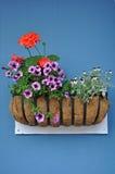Cesta da flor na parede azul foto de stock royalty free
