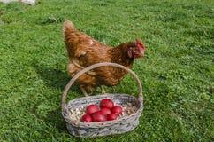 Cesta da galinha e dos ovos da páscoa fotografia de stock