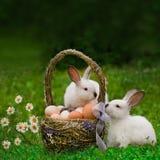 Cesta da Páscoa e o coelhinho da Páscoa Imagem de Stock Royalty Free