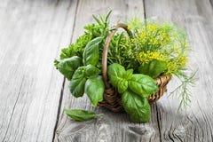 Cesta das ervas recentemente escolhidas que incluem a manjericão, alecrim, aneto a Fotografia de Stock Royalty Free