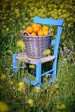 Cesta das laranjas nas flores 4 do amarelo Foto de Stock Royalty Free