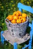 Cesta das laranjas nas flores 6 do amarelo Fotografia de Stock