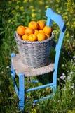 Cesta das laranjas nas flores 7 do amarelo Imagens de Stock