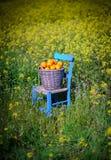Cesta das laranjas nas flores 9 do amarelo Imagem de Stock