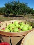 Cesta das maçãs Foto de Stock Royalty Free