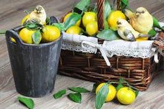 Cesta de Año Nuevo de los mandarines Imagen de archivo libre de regalías