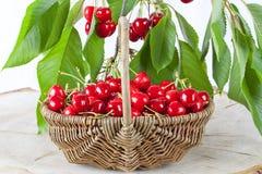Cesta de cerejas vermelhas frescas Fotos de Stock