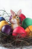 Cesta de Easter com ovos de Easter e coelho de Easter Foto de Stock