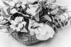 Cesta de flores blancas Fotos de archivo