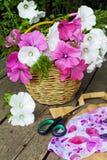 Cesta de flores en un fondo de madera Lavatera Fotos de archivo