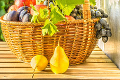 Cesta de fruta en el sol de la tarde Imagen de archivo libre de regalías